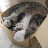 Les chats qui aiment les cartons