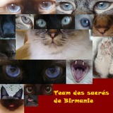 Team des sacrés de Birmanie