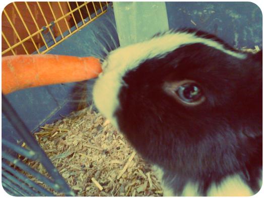Hier matin aux déjeuner c'est carotte !