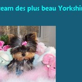 La team des plus beau yorkshire