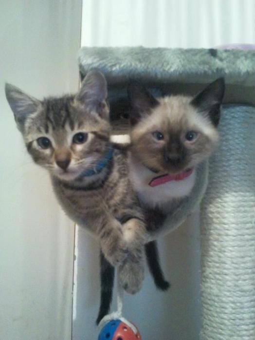 Voilà mes deux nouveaux frère :-)