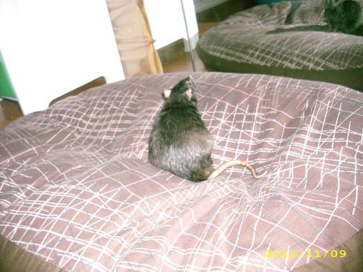 Sur le lit de Negra