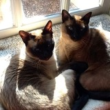 Raja and Jasmine