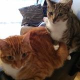 Mila & Mylo