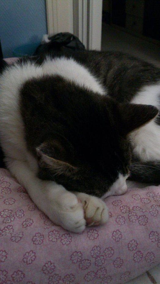 Je suis mignon quand je dors !