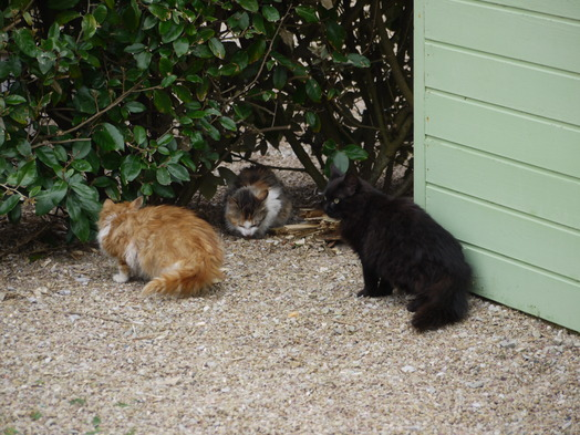 les chats du canping