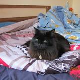 le club des chats noirs