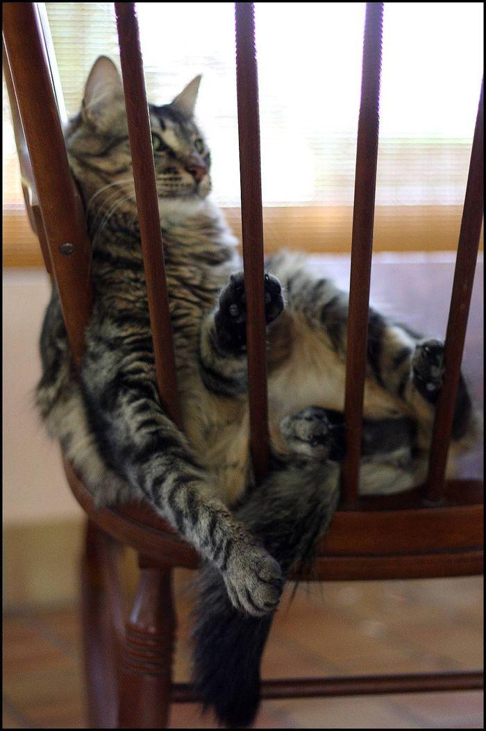 Mais non, j'te jure, c'est super confortable !