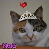 Nala (Nanou)