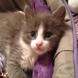 Petit Chat ?