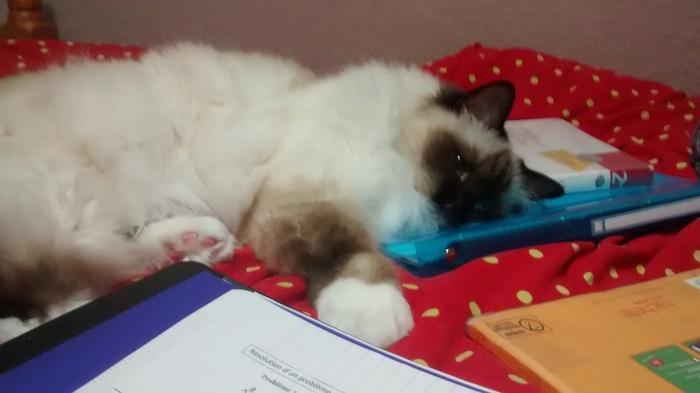 Je fatigue :')