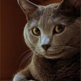 Griffon aux yeux d'or