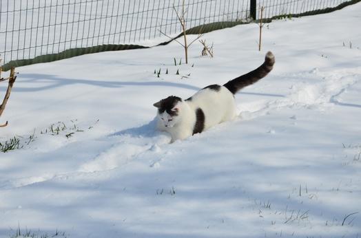 J'adore jouer dans la neige ;o)