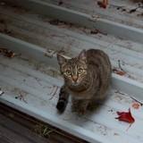 Aperçu autre joli petit chat à la fenêtre :)