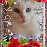 【ツ】Lilou 【ツ】