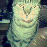 Tio'Cat
