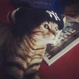 Pépito el gato de Chamartin