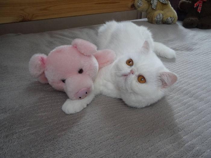 moi et le petit cochon...