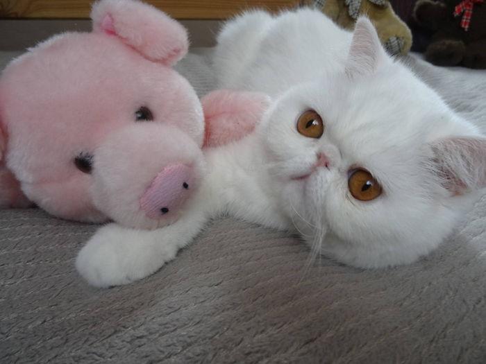 moi et le petit cochon rose...