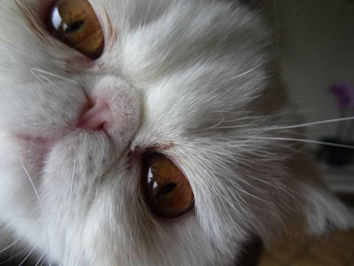 coucou, avez vous votez pour moi dans http://www.yummypets.com/fun/photoshoot/40-quand-mon-chaton-fait-un-selfie/