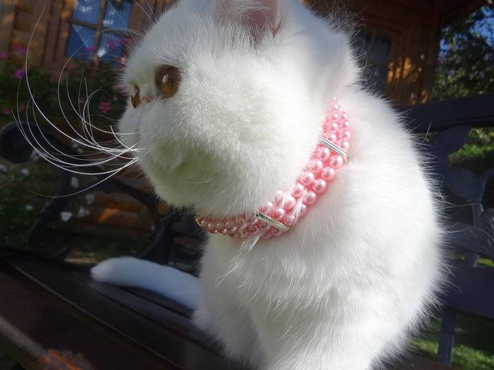 j'ai été très sage hier chez le veto....alors j'ai eu un beau collier...