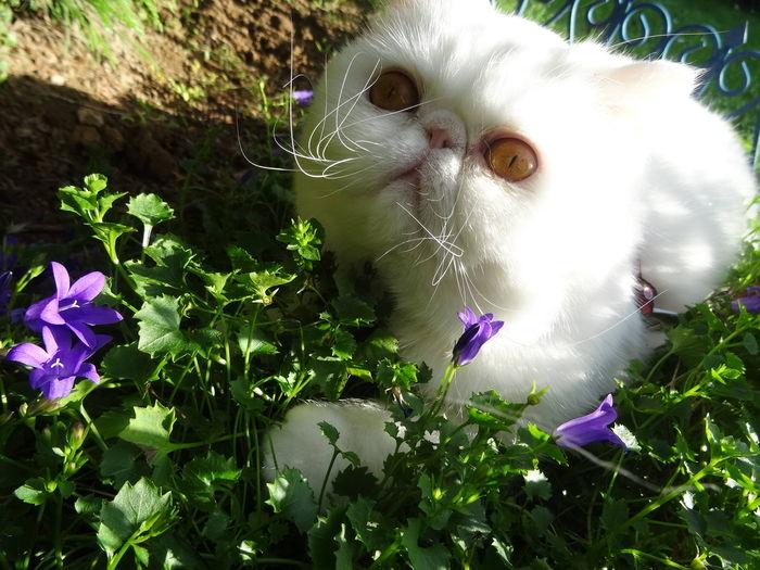 belle journée au jardin...