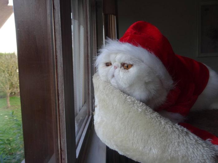 et voilà...on me déguise en mêre Noel...