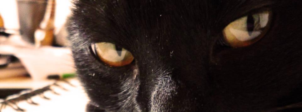 Tichat Suri-Cat