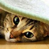 Un amour de chat...Ça me manque de ne plus la voir comme ça...
