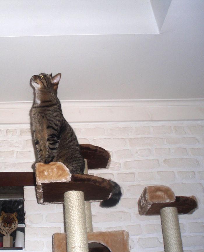 Cool je peux presque toucher le plafond :p Suffit justge que je me mette sur les papates arrières...