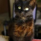 la petite chatte que papa et maman ont sauvé, est guérie ♥