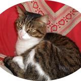 pusycat
