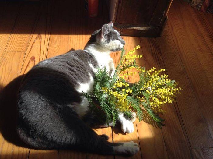 quelques fleurs pour vous mes chamis!