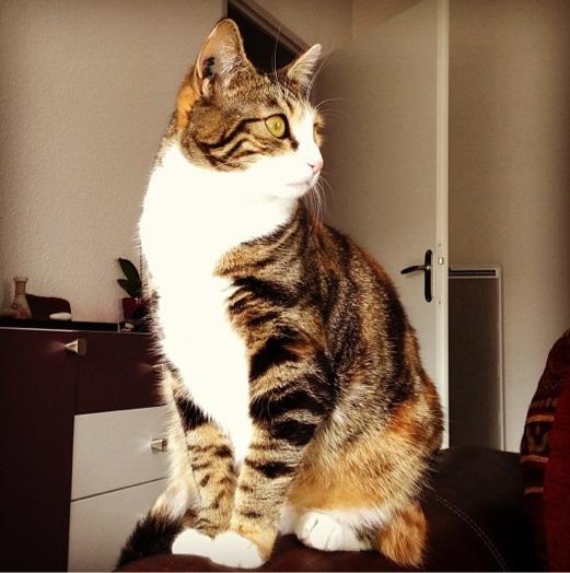 La plus belle des chatounettes :)