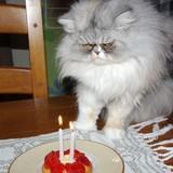 Pour fêter mes 2 ans !