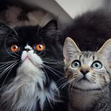 Chachou & Puce