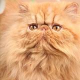 Lui c'est indra notre frères chaton mais il est au paradis des chatons ont pensent a lui