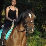 Moi et les chevaux