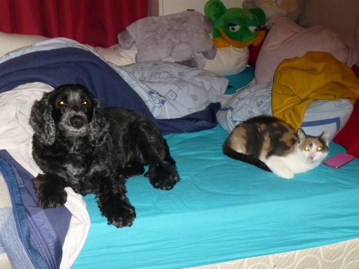 Avec ma p'tite soeur sur le lit de notre maitresse...