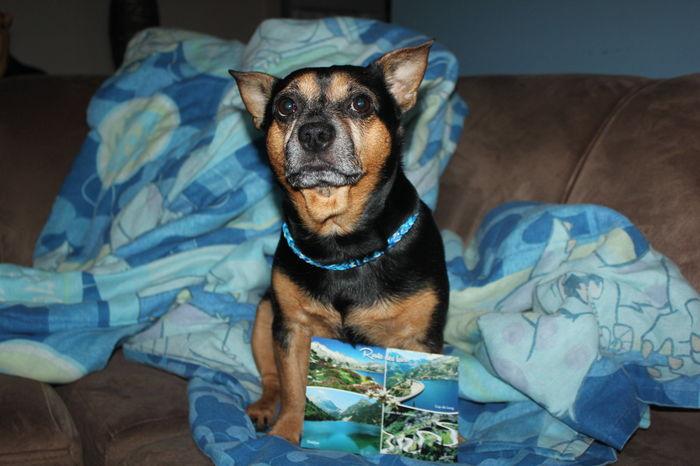 Merci mes amis Chéris Forest , Flipper , Texane , Imanol et Athéna pour votre Magnifique carte