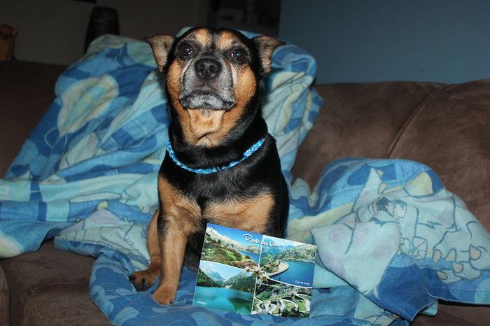 Merci à mes amis Forest , Flipper , Texane , Imanol et Athéna pour votre Magnifique carte