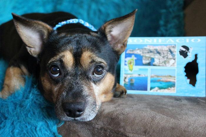 Merci beaucoup mon frèrot Jimmy pour ta belle carte de vacances de Corse