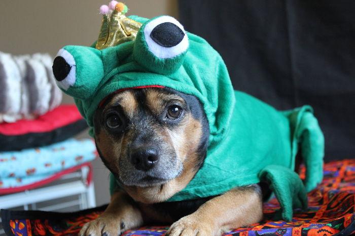 Mon costume pour Halloween