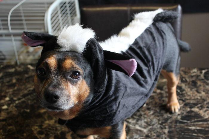 Mon déguisement de Mouffette