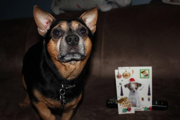Merci ma belle Kaya pour ta belle carte des fêtes ♥♥♥♥
