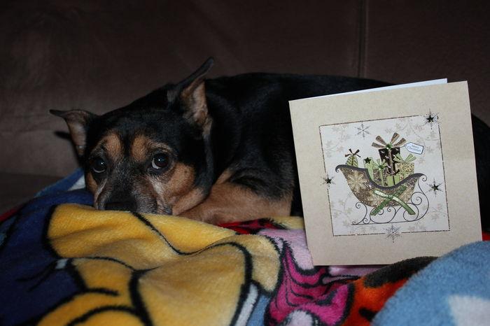 Merci ma belle Bimbo pour ta belle carte des fêtes♥♥♥♥