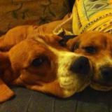 SAXO et LILY