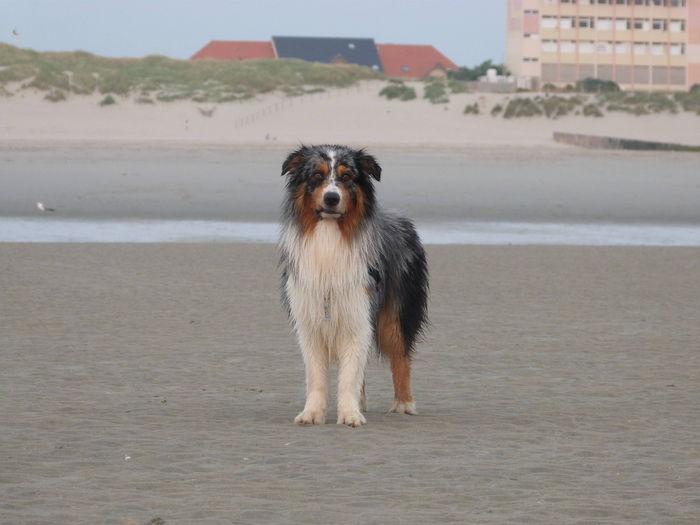 Virée nocturne a la plage