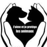 Non à la maltraitance animale