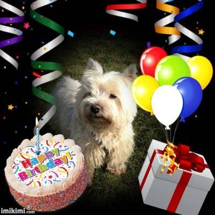 joyeux anniversaire Bazil